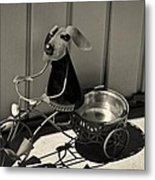 Tricycle Dog Metal Print