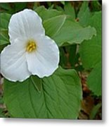 Trillium Near The River Metal Print