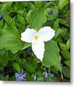 Trillium - White Beauty Metal Print