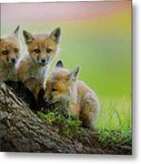 Trio Of Fox Kits Metal Print