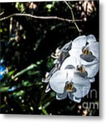 Trio Of Orchids Metal Print by Shawn Lyte