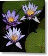 Trio Of Purple Water Lilies Metal Print