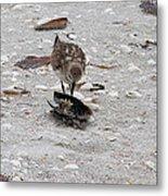 Trio Of Shore Birds Metal Print