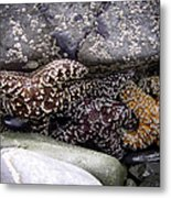 Trio Of Starfish Metal Print