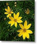 Trio Of Yellow Flower Blossoms Metal Print