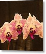 Triple Orchid Arrangement 1 Metal Print