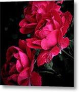 Triple Rose  Metal Print