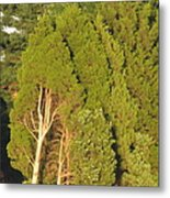 Triple Trees Metal Print by Debbie Nester
