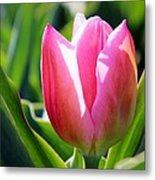 Triumph Tulip Metal Print