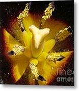 Triumph Tulip Named Gavota Metal Print