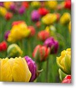 Triumphant Tulips Metal Print