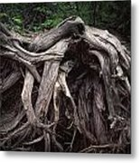 Troots Of A Fallen Tree By Wawa Ontario Metal Print