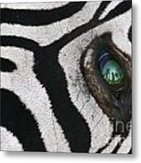 Trophy Hunter In Eye Of Dead Zebra Metal Print