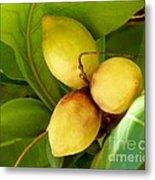 Tropical Almond Metal Print