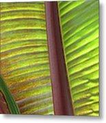 Tropical Banana Leaf Abstract Metal Print