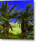 Tropical Beach Light Hdr Effect Metal Print