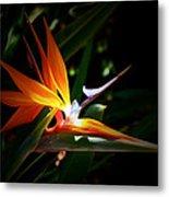 Tropical Bloom Metal Print