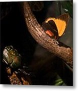 Tropical Butterfly And Rhinoceros Beetle Metal Print