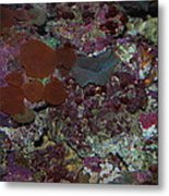 Tropical Coral Metal Print