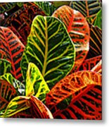 Tropical Croton Metal Print