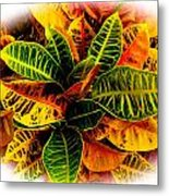 Tropical Croton Vignette Metal Print by Lisa Cortez