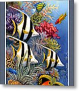 Tropical Fish A Metal Print