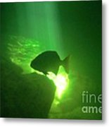 Tropical Fish Shilouette In A Cenote Metal Print