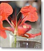 Tropical Flamboyant Flower Metal Print