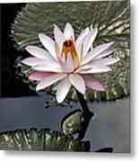 Tropical Floral Elegance Metal Print