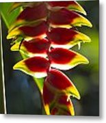 Tropical Flower 1 Metal Print