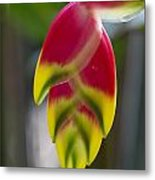 Tropical Flower 2 Metal Print