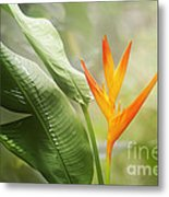 Tropical Flower Metal Print by Natalie Kinnear
