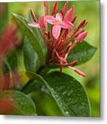 Tropical Flowers In Singapore Metal Print