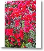 Tropical Flowers Of South Florida Metal Print