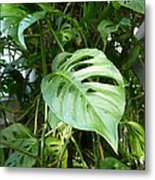 Tropical Green Foliage Metal Print