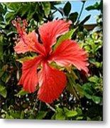 Tropical Hibiscus 002 Metal Print