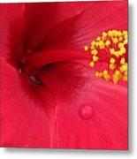 Tropical Hibiscus - Antigua Wind 01 Metal Print