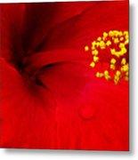 Tropical Hibiscus - Antigua Wind 01a Metal Print