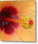Tropical Hibiscus - Aruba Wind 01 Metal Print