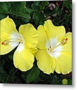 Tropical Hibiscus - Bonaire Wind 01 Metal Print