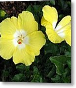 Tropical Hibiscus - Bonaire Wind 02 Metal Print