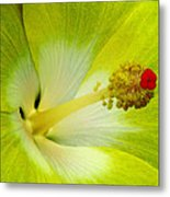 Tropical Hibiscus - Bonaire Wind 03a Metal Print