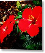 Tropical Hibiscus - Starry Wind 01a Metal Print