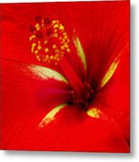 Tropical Hibiscus - Starry Wind 02a Metal Print