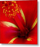 Tropical Hibiscus - Starry Wind 03a Metal Print