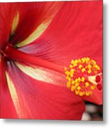 Tropical Hibiscus - Starry Wind 04 Metal Print