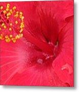 Tropical Hibiscus - Trinidad Wind 01 Metal Print