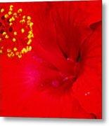 Tropical Hibiscus - Trinidad Wind 01a Metal Print