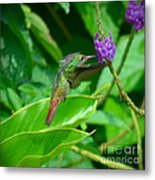 Tropical Hummingbird Metal Print