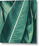 Tropical Palm Leaf, Dark Green Toned Metal Print